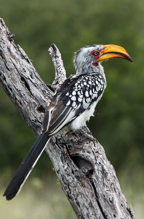 Pájaros de Tanzania imagen de archivo