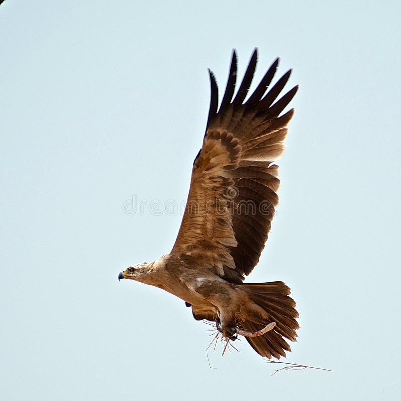 Pájaros de Tanzania imagen de archivo libre de regalías