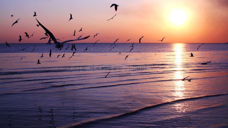 Pájaros de vuelo de la silueta imagen de archivo libre de regalías