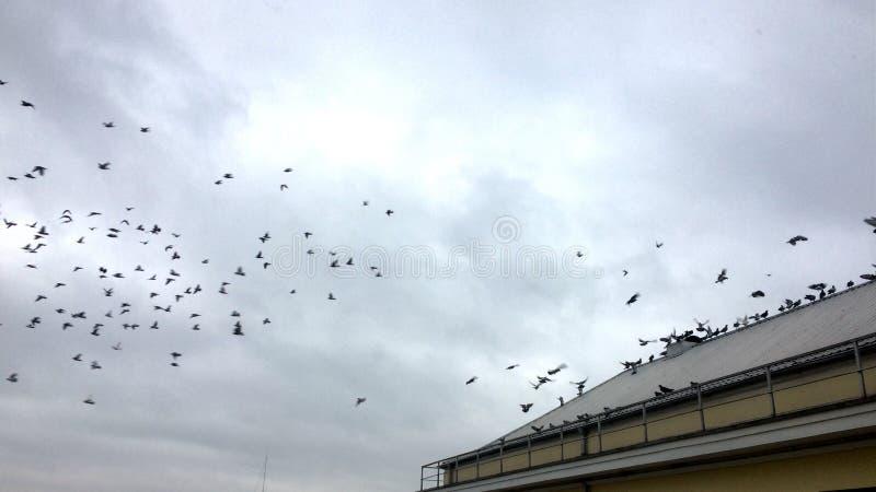 Pájaros de vuelo en cielo nublado fotografía de archivo libre de regalías