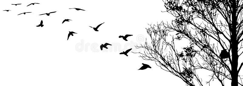 Pájaros de vuelo y siluetas de la rama en el fondo blanco fotos de archivo libres de regalías
