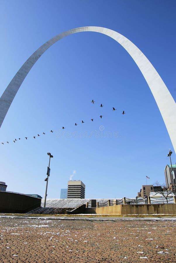 Pájaros del arco del Gateway de St. Louis fotografía de archivo