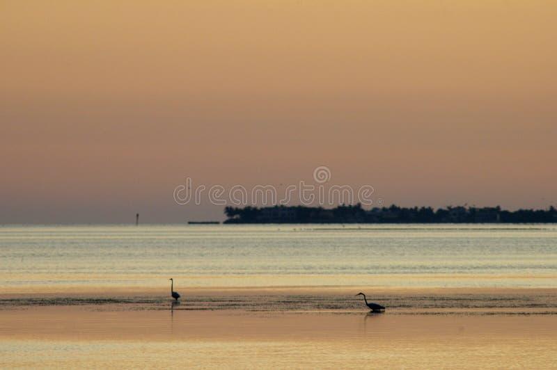 Pájaros del extracto dos de la playa en el océano imagenes de archivo
