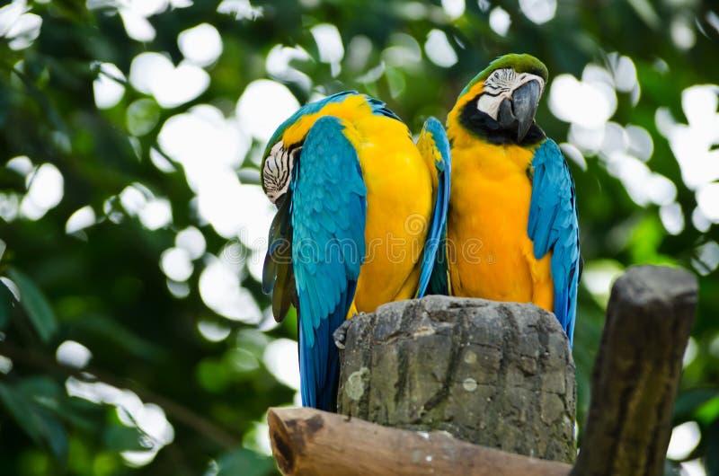 Pájaros del Macaw imágenes de archivo libres de regalías