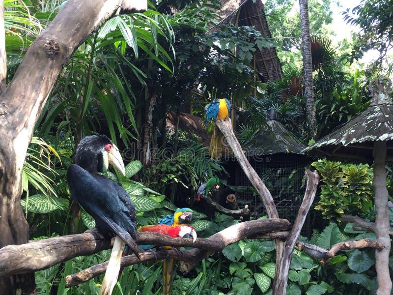 Pájaros del paraíso fotos de archivo