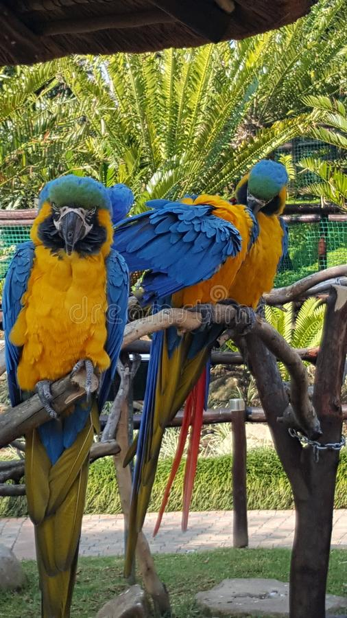 Pájaros del SA * parque foto de archivo