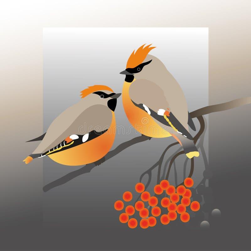 Pájaros del Waxwing y un manojo de serbal stock de ilustración