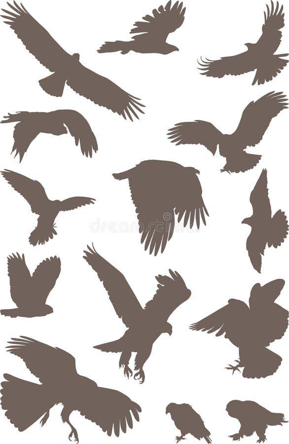 Pájaros Despredadores Imagen de archivo libre de regalías