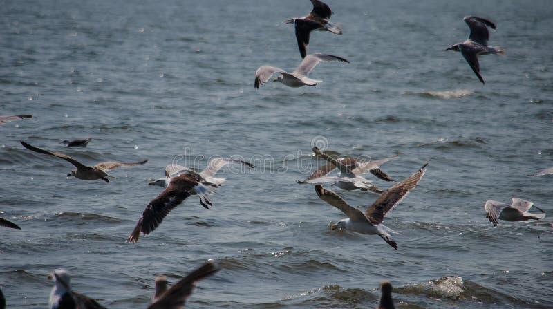 Pájaros en bahía de Chesapeake imágenes de archivo libres de regalías