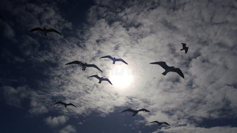 Pájaros en cielo imagen de archivo