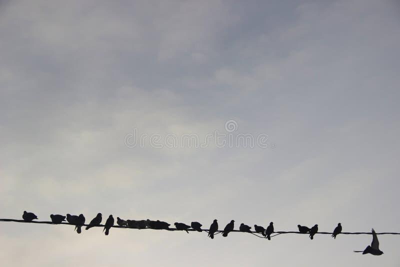 Pájaros en el ambiente urbano del invierno Palomas que sientan al grupo en fila en los alambres imagen de archivo