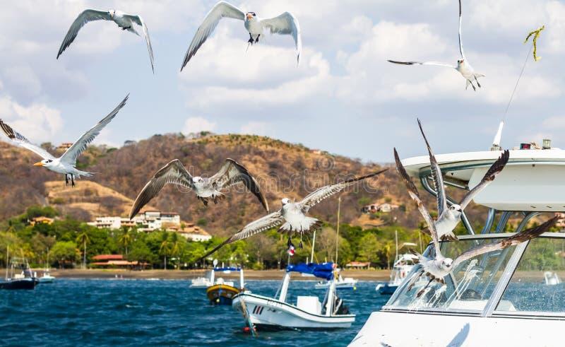 Pájaros en el barco fotos de archivo libres de regalías
