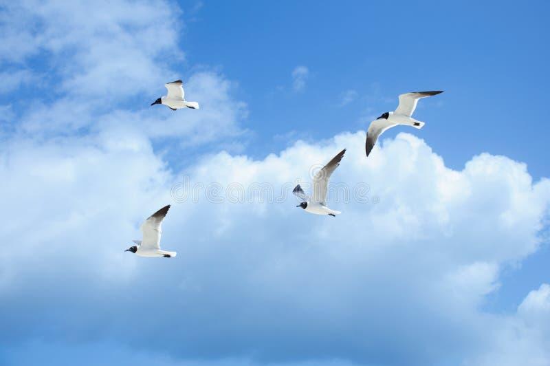 Pájaros en el cielo foto de archivo