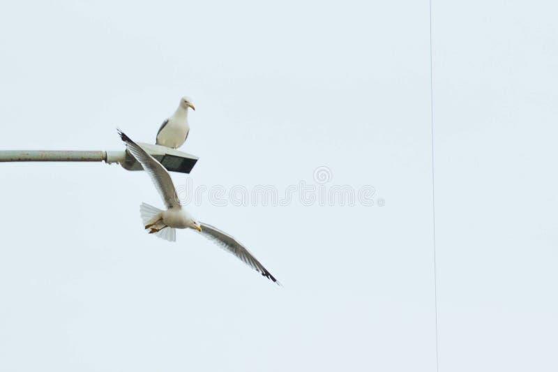 Pájaros en el cielo fotos de archivo libres de regalías