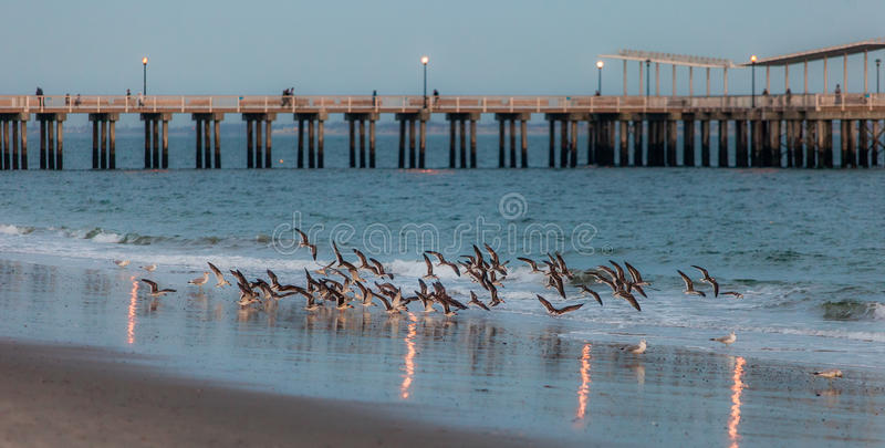 Pájaros en el mar imagen de archivo libre de regalías