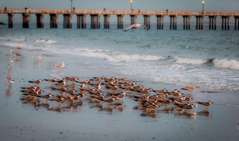 Pájaros en el mar fotografía de archivo