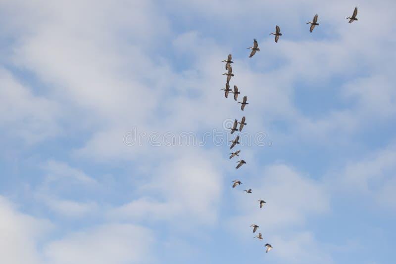 Pájaros en la formación imagen de archivo libre de regalías