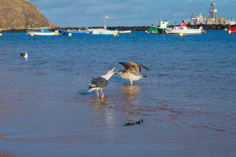 Pájaros en la playa imagenes de archivo
