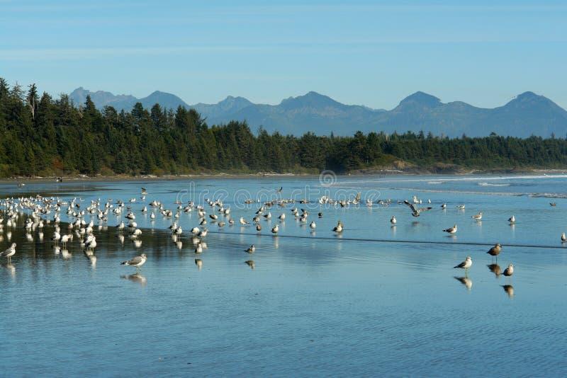 Pájaros en la playa fotos de archivo libres de regalías