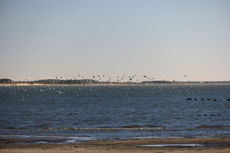 Pájaros en la playa del norte de la isla del Frisian de Amrum foto de archivo