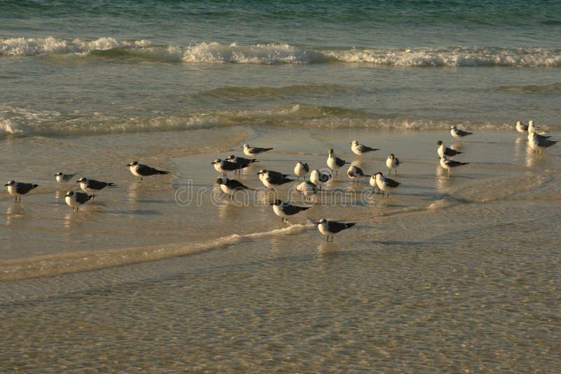 Pájaros en la playa, pie Walton Beach FL fotos de archivo