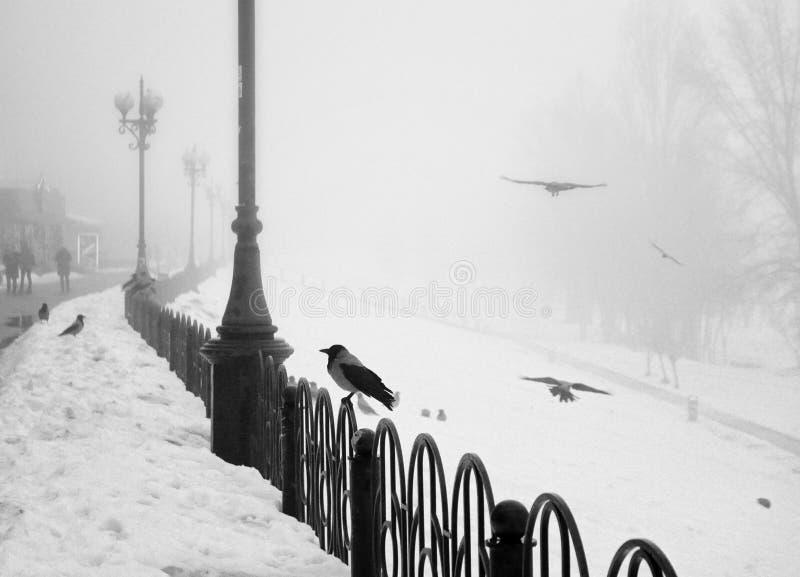 Pájaros en la 'promenade' del invierno foto de archivo