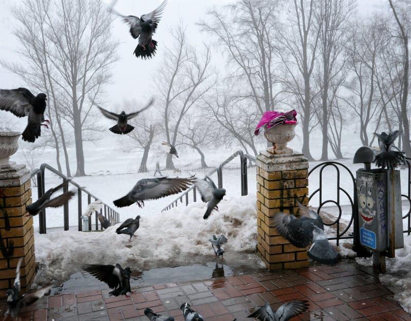 Pájaros en la 'promenade' del invierno imagen de archivo