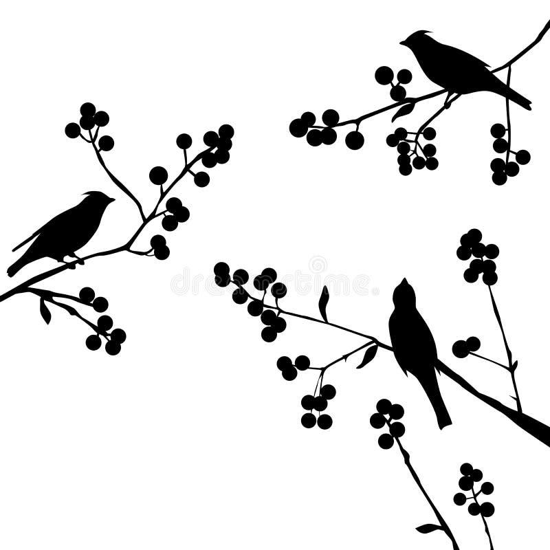 Pájaros en la rama - sistema de elementos del vector stock de ilustración