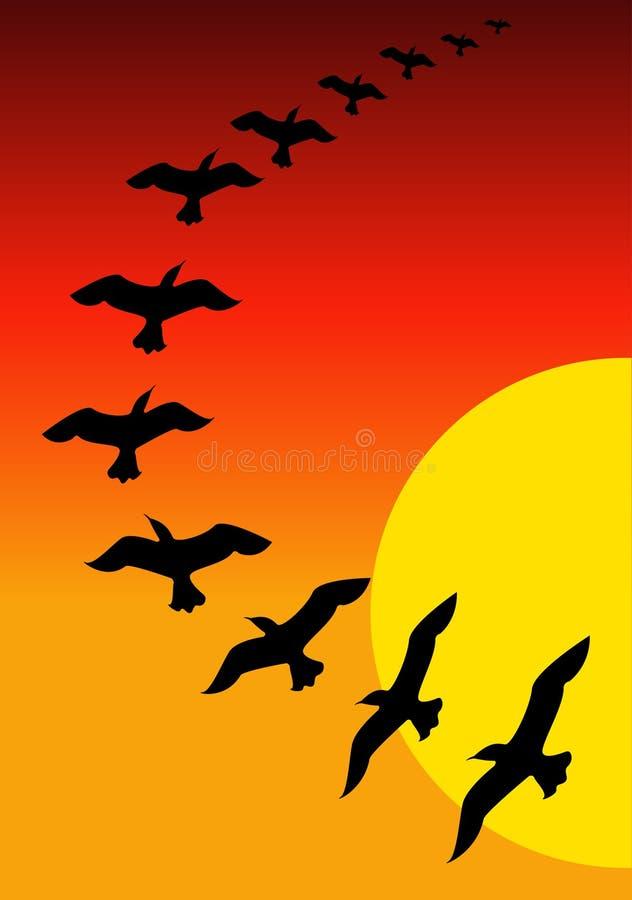 Pájaros en puesta del sol libre illustration