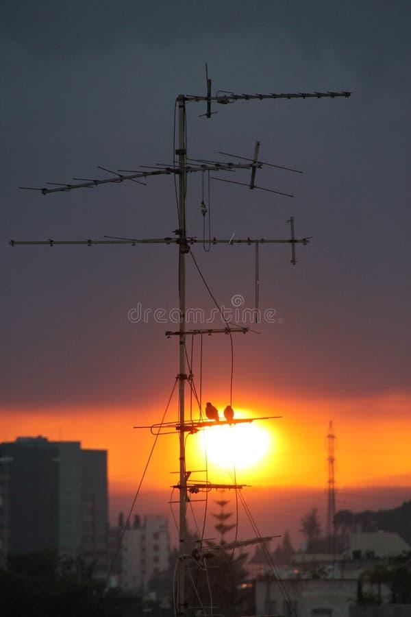 Pájaros en salida del sol de observación de la antena foto de archivo