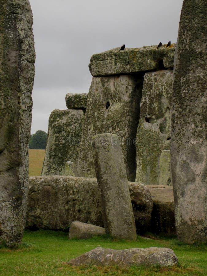 Pájaros en Stonehenge fotos de archivo libres de regalías