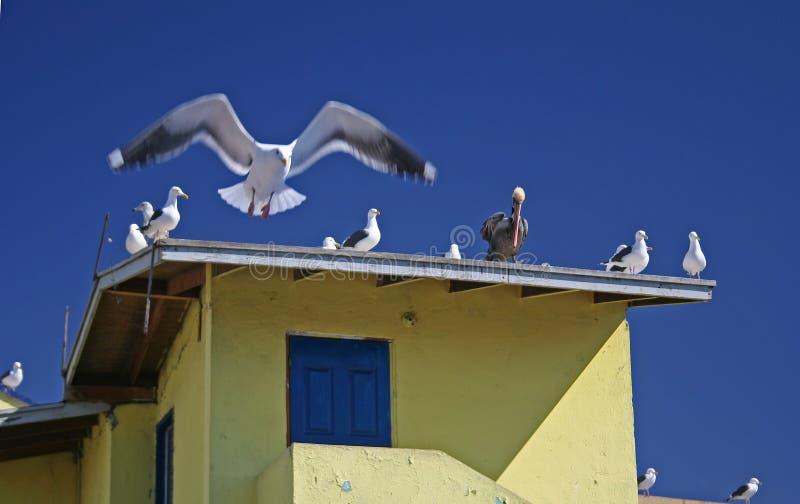Pájaros en tapa de la azotea imagen de archivo libre de regalías