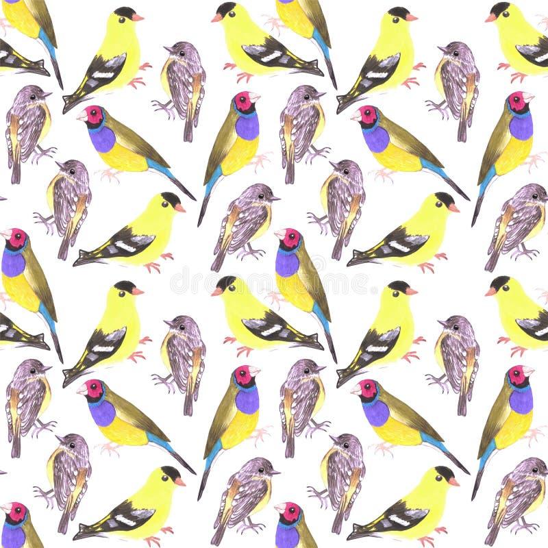 Pájaros en tintes y sombras del fondo de pintura del pájaro inconsútil amarillo de la acuarela stock de ilustración