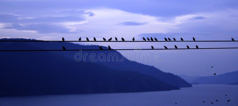 Pájaros en un alambre foto de archivo