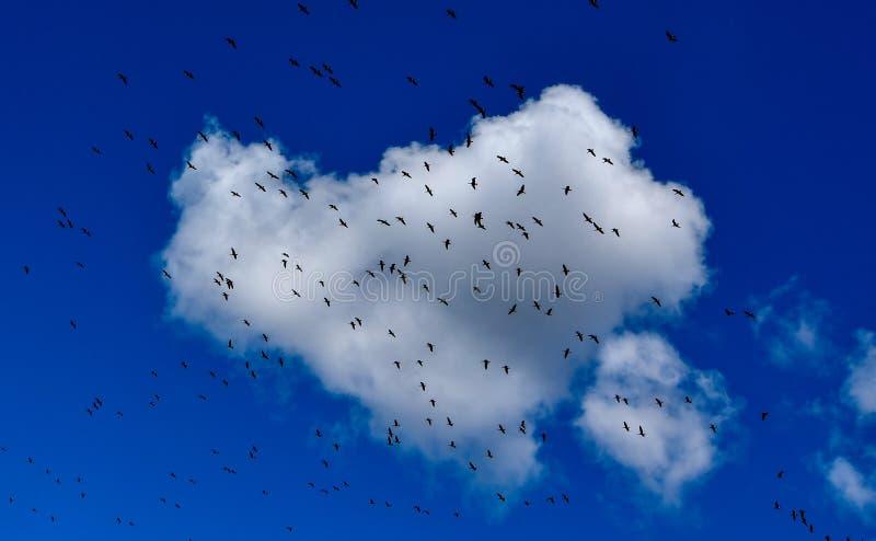 Pájaros en una nube imágenes de archivo libres de regalías
