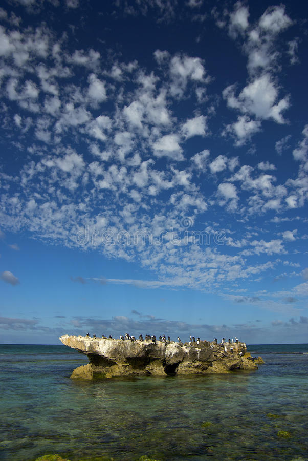 Pájaros en una roca imágenes de archivo libres de regalías