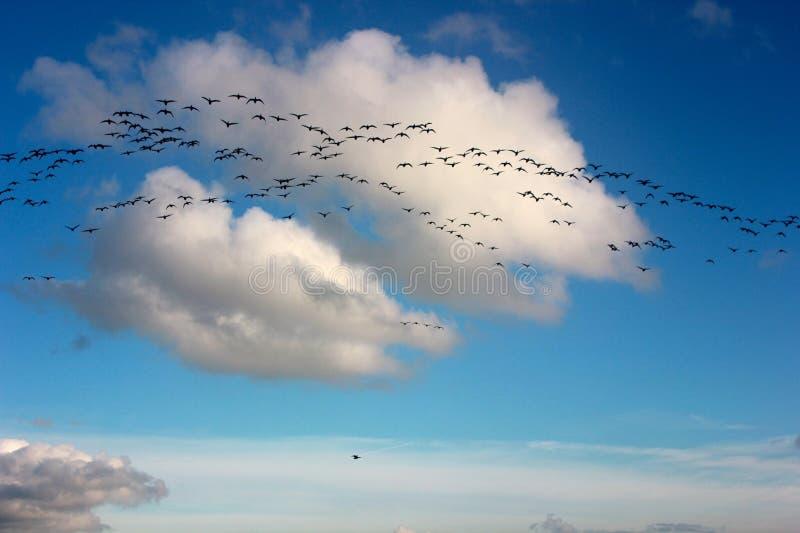 Pájaros en vuelo fotografía de archivo