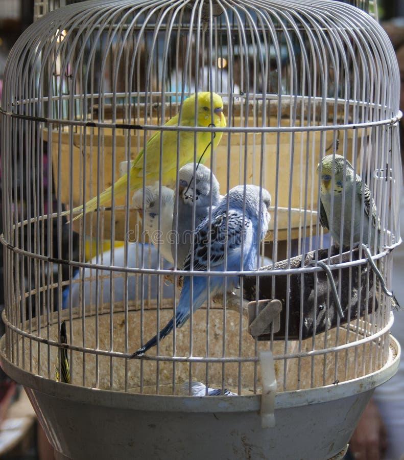 Pájaros enjaulados fotos de archivo