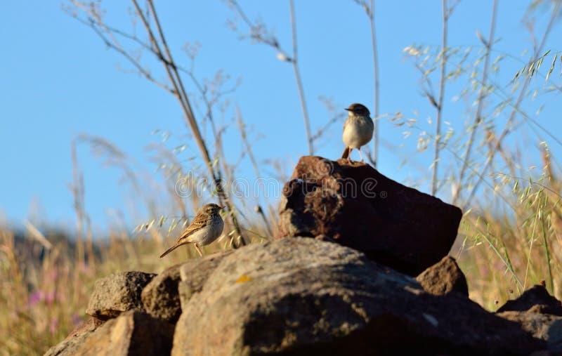 Pájaros entre las piedras imagen de archivo libre de regalías