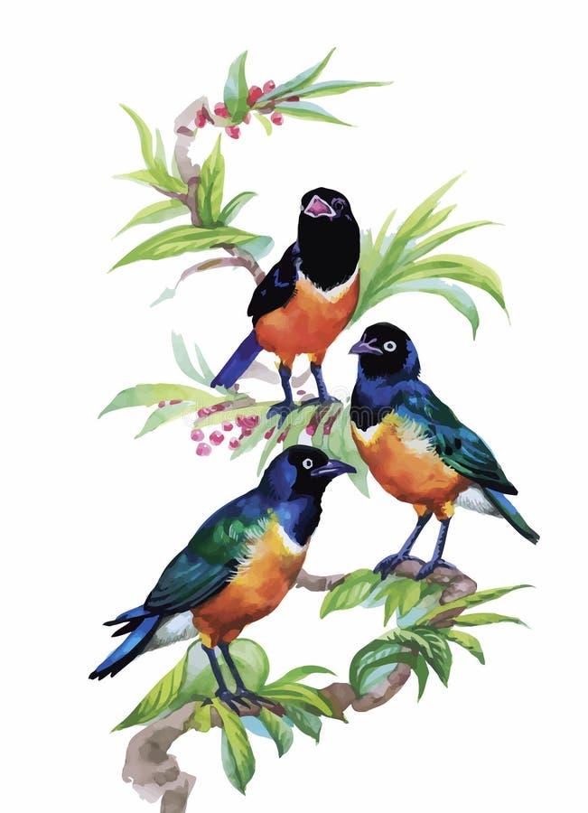Pájaros exóticos salvajes de la acuarela en las flores libre illustration