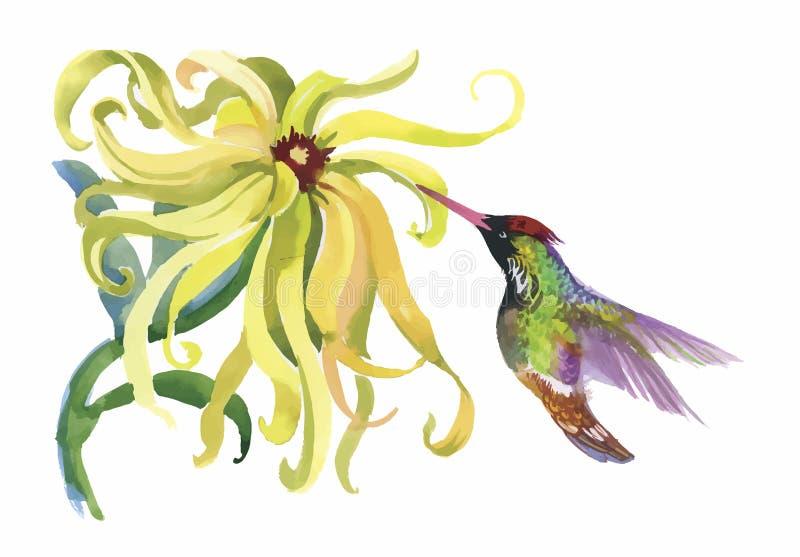 Pájaros exóticos salvajes de la acuarela en las flores ilustración del vector