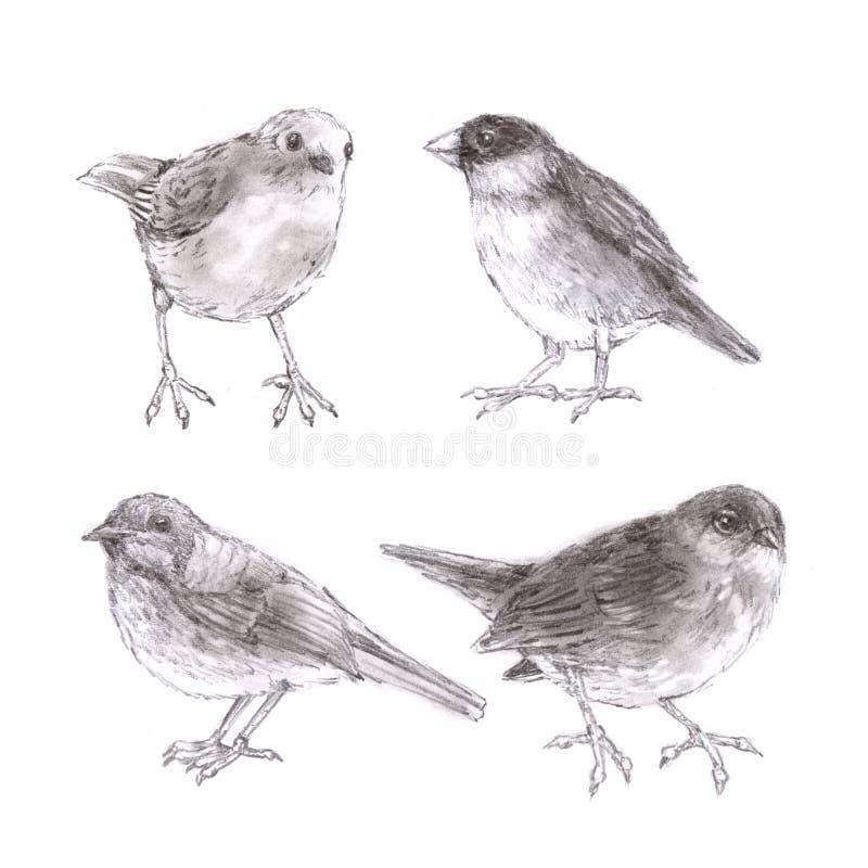 Pájaros exhaustos de la mano en el ejemplo artístico del fondo blanco fotos de archivo