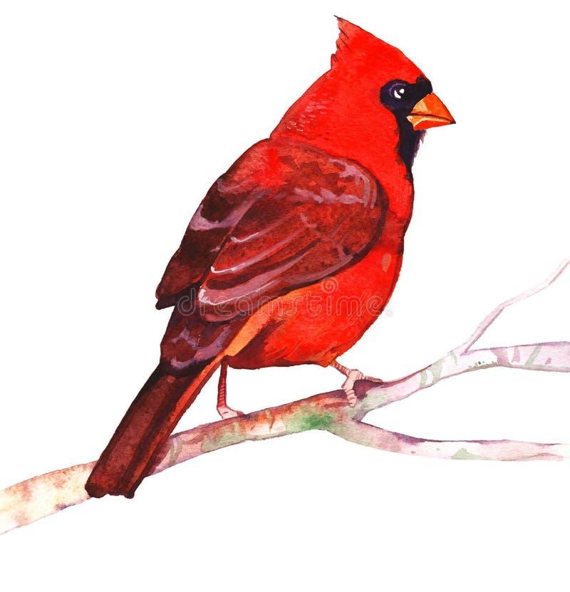 Pájaros fijados, waxwing, trepatroncos de la acuarela ilustración del vector