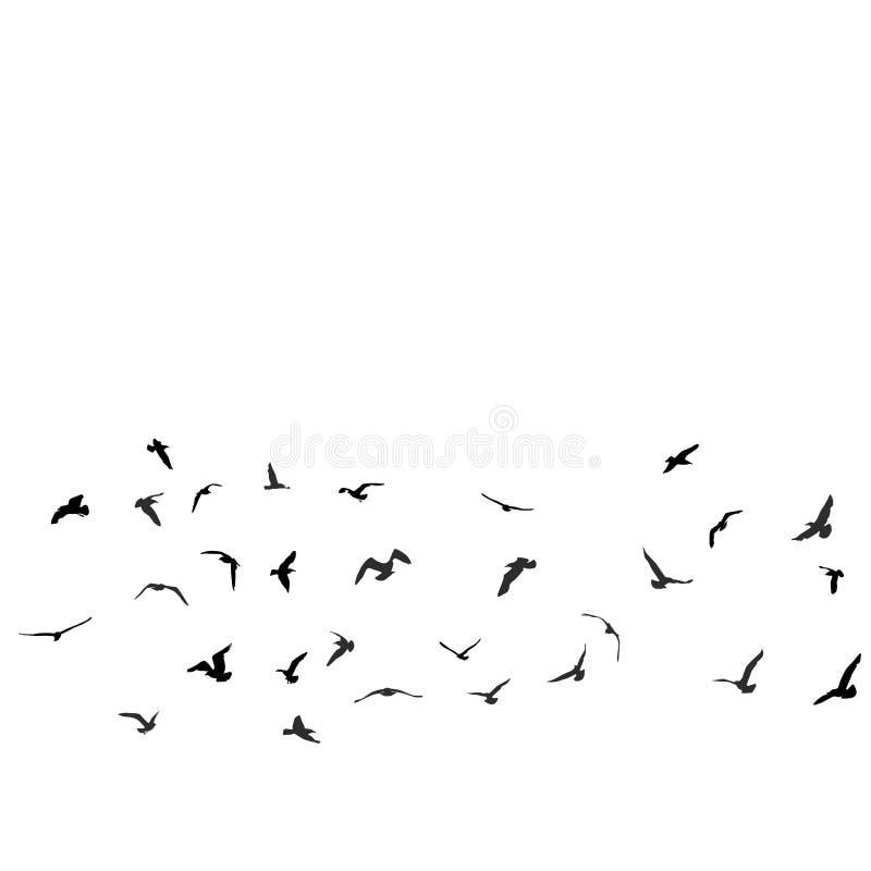 Pájaros, gaviotas, silueta negra en el fondo blanco stock de ilustración