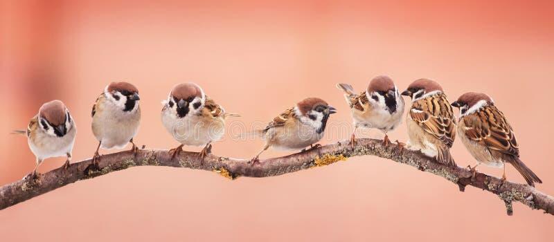 Pájaros hermosos de la Navidad panorámica de la imagen pequeños que se sientan en a imagen de archivo