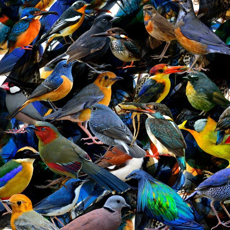 Pájaros hermosos en tope adentro a la textura fascinada para imagen de archivo libre de regalías