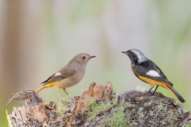 Pájaros hermosos que se colocan en el registro en la salida del sol foto de archivo libre de regalías