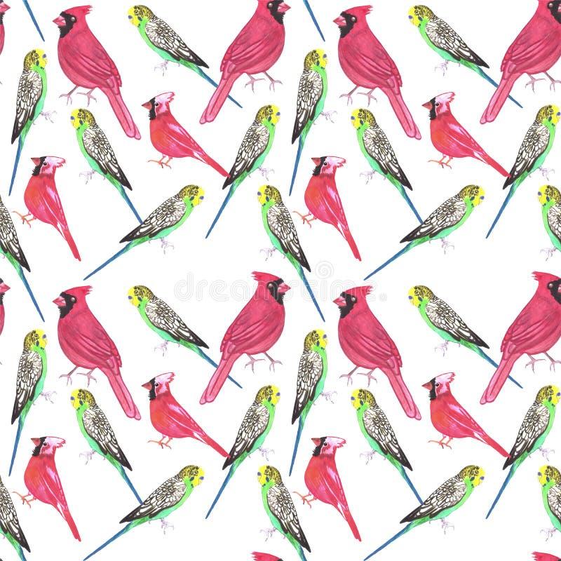 Pájaros inconsútiles cardinales septentrionales de la acuarela del varón y del pájaro de los budgies que pintan el fondo stock de ilustración