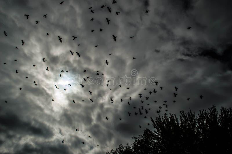 Pájaros lejos imagen de archivo libre de regalías
