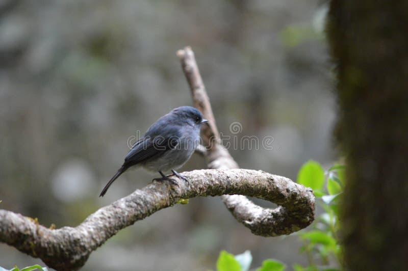 pájaros fotos de archivo libres de regalías